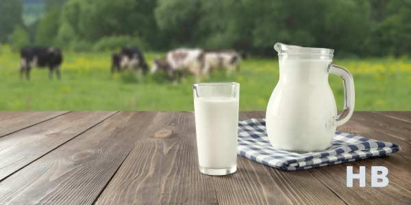 Best Protein Milk