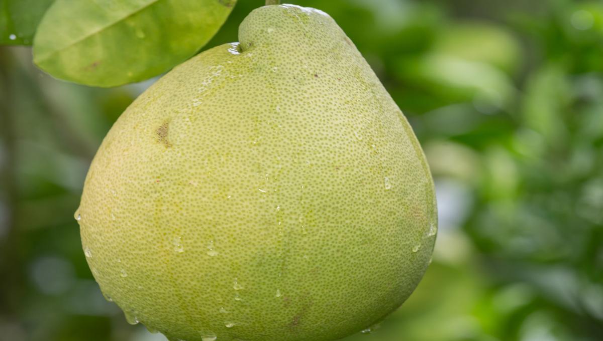 health-benefits-of-pomelo